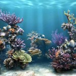 3D-_Aquarium_wallpaper